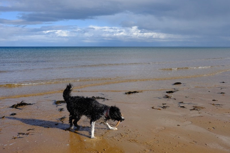 Jack, with stick retrieved, yet again, from the sea